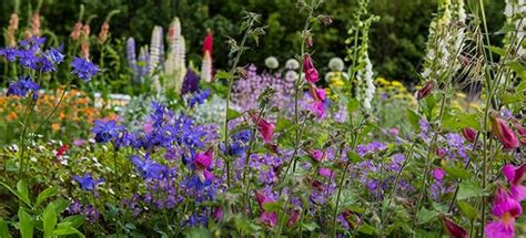 chelsea flower show coach trip packages 2018