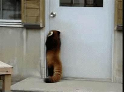 Short Door Gym Funny Gifs Animal Pants