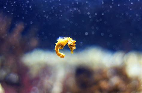 The Baby Seahorse Tumblr