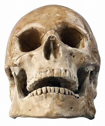 Skull Skeleton Transparent Human Drawing Purepng Pluspng