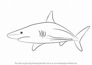 Blacktip Shark Drawing | www.pixshark.com - Images ...