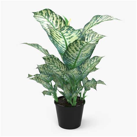 indoor plant food dieffenbachia picta plant 3d model max obj fbx c4d