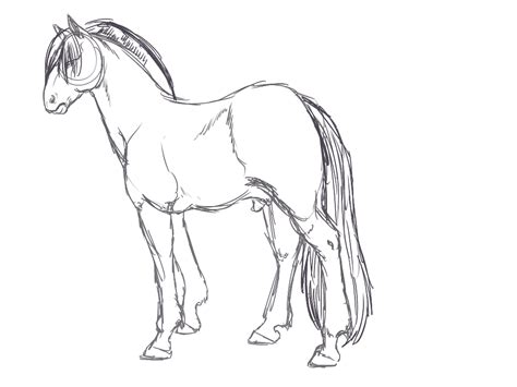 Fjord Drawing by Fjord Horse Sketch By Sarahostervig On Deviantart