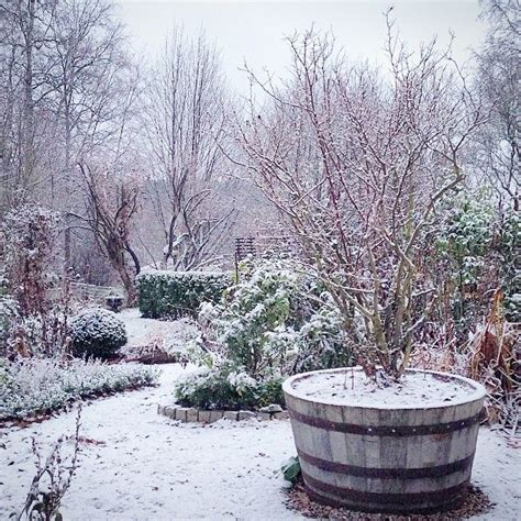 gardens  winter images  pinterest