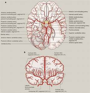 A  And  B  The Main Blood Vessels Supplying The Brain In