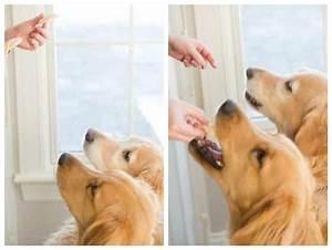 Frozen Peanut Butter-Yogurt Dog Treats