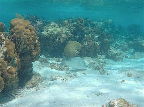 slow  caye caulker belize  incredible island