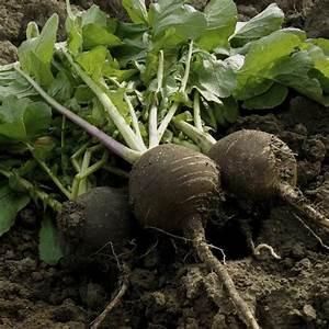 Que Planter En Juin : que planter en juillet aout ~ Melissatoandfro.com Idées de Décoration