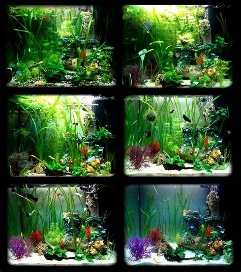 bienvenue dans notre aquarium evolution d un aquarium communautaire bien plant 233