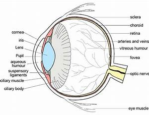 Labeled Diagram Of The Eye Awesome Parts Of The Eyes