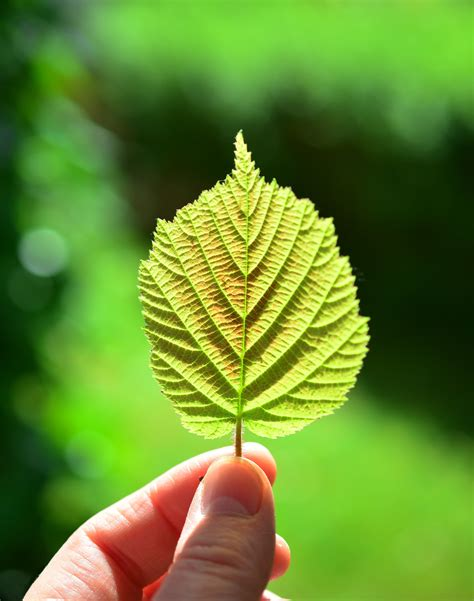 green leaf close  photography  stock photo