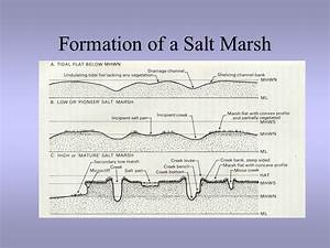 Tidal Marshes Physical Factors