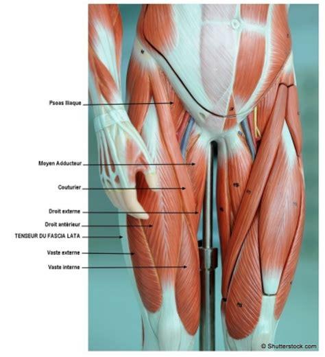 mal interieur cuisse gauche peut on 233 tirer le tendon du fascia lata lepape info