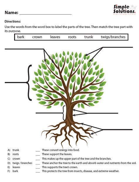 activity  part  tree pic simple solutions