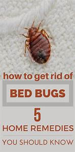 how to get rid of bed bugs 5 home remedies you should With bugs that get in your bed