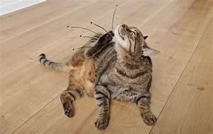 Puce De Chien : animal puce ceremei ~ Melissatoandfro.com Idées de Décoration