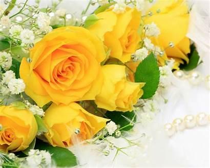 Flowers Yellow Roses Wallpapers Nature Desktop Flower