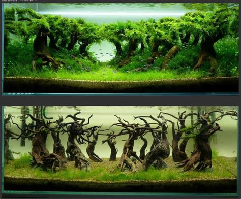 aquascaping ideas 100 aquascape ideas aquariums terrarium vivariums