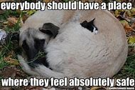 Funny Animal Quotes Dog