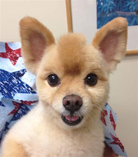types  dog haircuts fade haircut