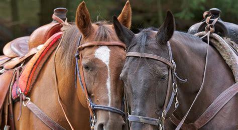 tahoe riding lake horseback south