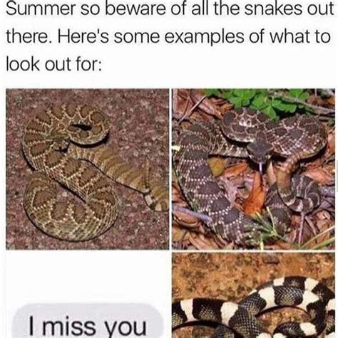 Snake Meme The Best Snake Memes Memedroid