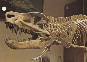 Prehistoric Crocodile Fossil | www.pixshark.com - Images ...
