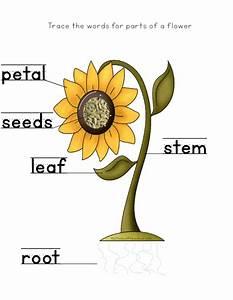 Image Result For Sunflower Story
