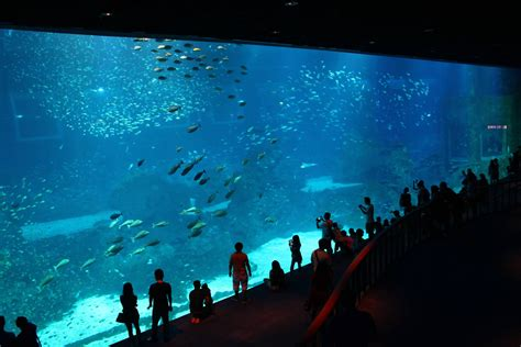 aquarium sea sea aquarium world s largest aquarium locks up underwater magic in majestic diversity