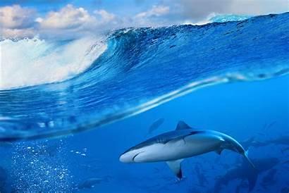 Shark Waves Sea Desktop Wallpapers Backgrounds Px