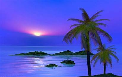 Palm Tree Trees Sunset Wallpapers Desktop Background