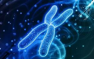 Chromosome Dna Pattern Genetic 3