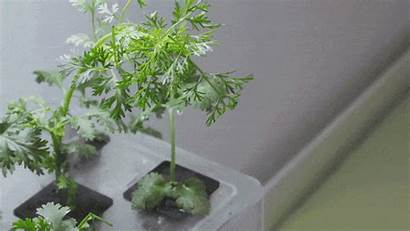 Plants Extremely Living Herbs Grow Need Watering