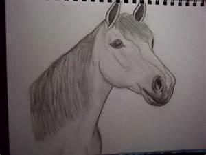 Horse Head Drawing - SteelWolf98 © 2018 - Apr 13, 2011