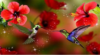 Spring Wallpapers Season Desktop Bird Android Nature