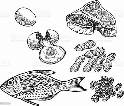 Protein Fish Eggs Meat Beans Nuts Vector
