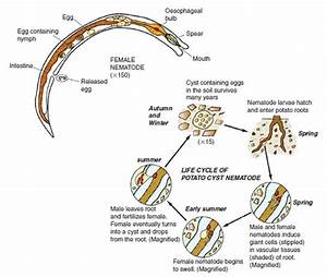 Nematode Pests