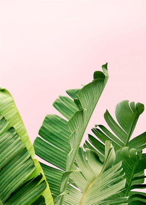 Monstera leaf print, palm leaf print, monstera deliciosa print,black leaf print, botanical print black white, affiche tropical, tropical art. Banana Leaf Print, Leaf Print, Palm Leaf, Tropical Poster, Download, Summer Print, Summer Art ...