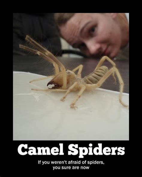 Afraid Of Spiders Meme - i m afraid of camels and spiders and now camel spiders