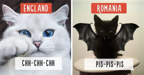 How People Call Cats In Different Countries  Bored Panda