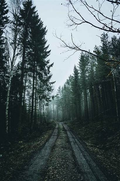 Forest Nature 4k Wallpapers Iphone Fond Phone