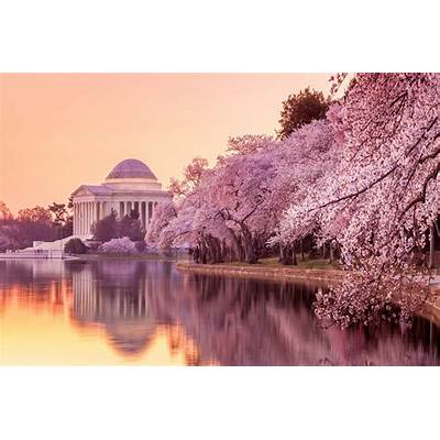 travelhouseNational Cherry Blossom Festival