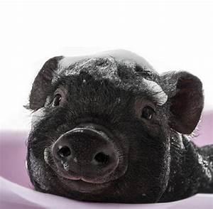 Was Kostet Ein Vollbad : partnersuche flirten mit hund ganz schlechte idee welt ~ Eleganceandgraceweddings.com Haus und Dekorationen