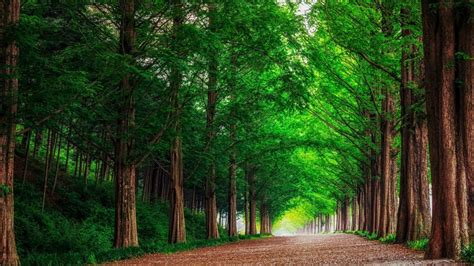 Green Forest by Hd Background Green Forest Trees Road Wallpaper