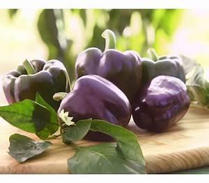Paprika Pflanzen Pflege : paprika lila dehner garten center ~ Markanthonyermac.com Haus und Dekorationen