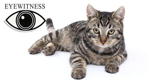 EYEWITNESS | Cat | US Version feat. Martin Sheen | S1E3 ...