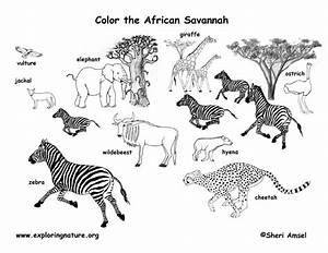 Savannah clipart grassland animal - Pencil and in color ...