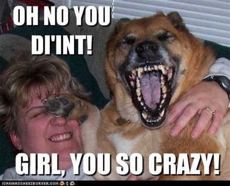 Crazy Bitch Meme - your a crazy bitch but you