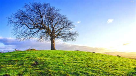 Single Tree On The Green Field  Wide Screen Wallpaper 1080p,2k,4k
