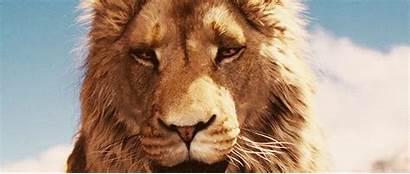 Aslan Narnia Costumes Halloween Te Lion Three